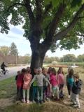 Wizyta w parku grupy IV